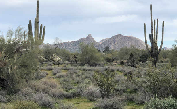 an empty parcel of land with two cacti and mountains in the distance